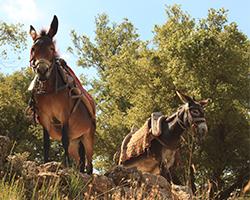 balade à dos d'ânes Montclar