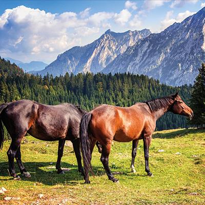 Équitation Montclar les 2 vallées