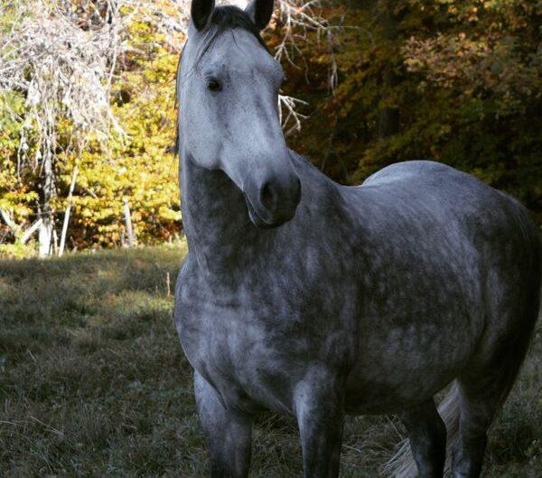 Rando cheval