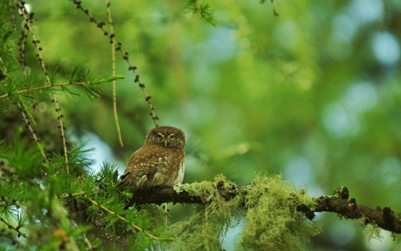 Inventerre : Festival de la Biodiversité